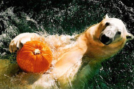 polarbearpumpkin.jpg