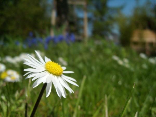 Frühling aus der Sicht eines Kleinstlebewesens
