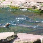 Noch ein paar Wassertiere