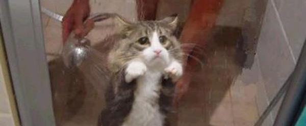 showercat